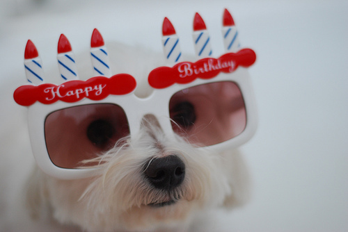 http://musingsonotherqueens.files.wordpress.com/2011/06/happy-birthday-dog.jpg